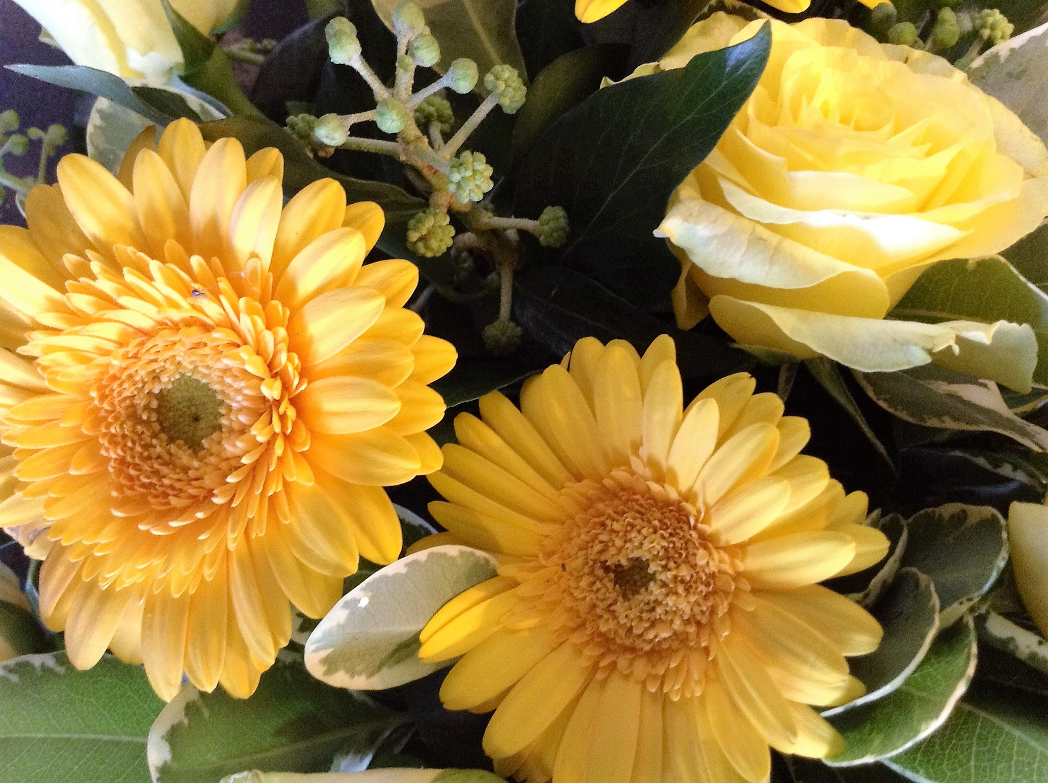 Floral designs in great yarmouth order online call 01493 718 299 what our customers say izmirmasajfo
